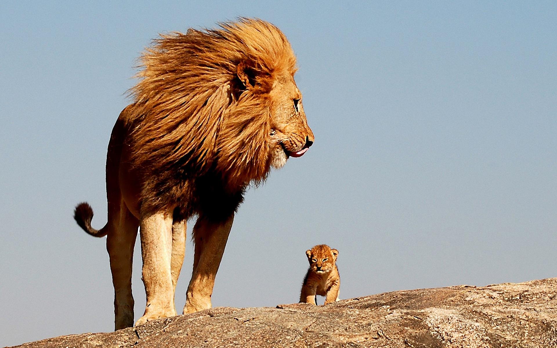 Лъвовете на Херо